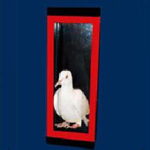 Automatic Dove to Silk w/ DVD - Tora